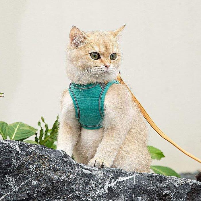A cica biztonsága érdekében image